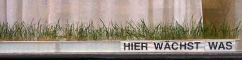 Gras wächst in einem Kasten mit dieser Zeile dazu: Hier wächst was.