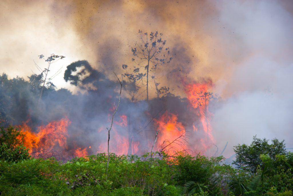 Neue Studie: EU-Mercosur-Abkommen Brandbeschleuniger der Klimakrise