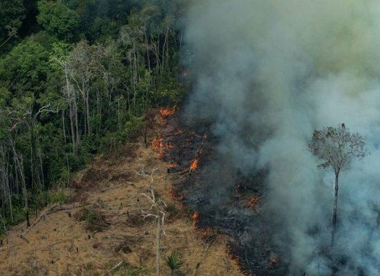 Der Regenwald brennt! Handelsabkommen zwischen EU und MERCOSUR stoppen!