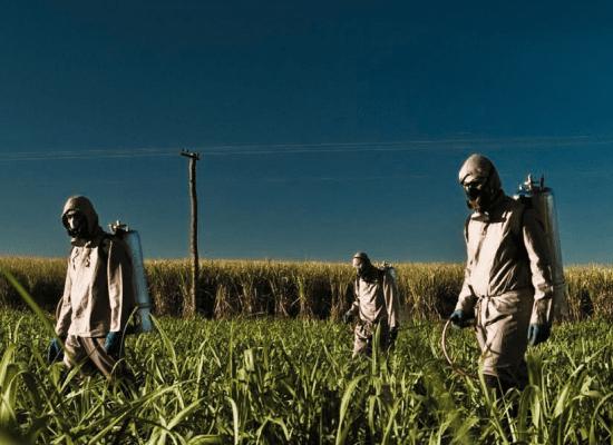 Arbeitende bringen Pestizide auf Sojafeld aus