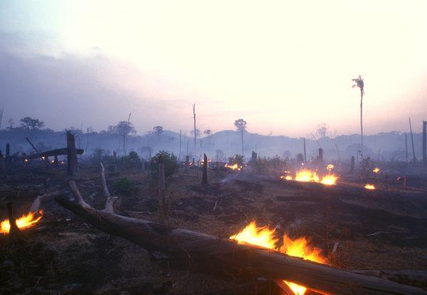 Landschaftsaufnahme von abgebranntem Regenwald, einige Feuer lodern noch im Vordergrund