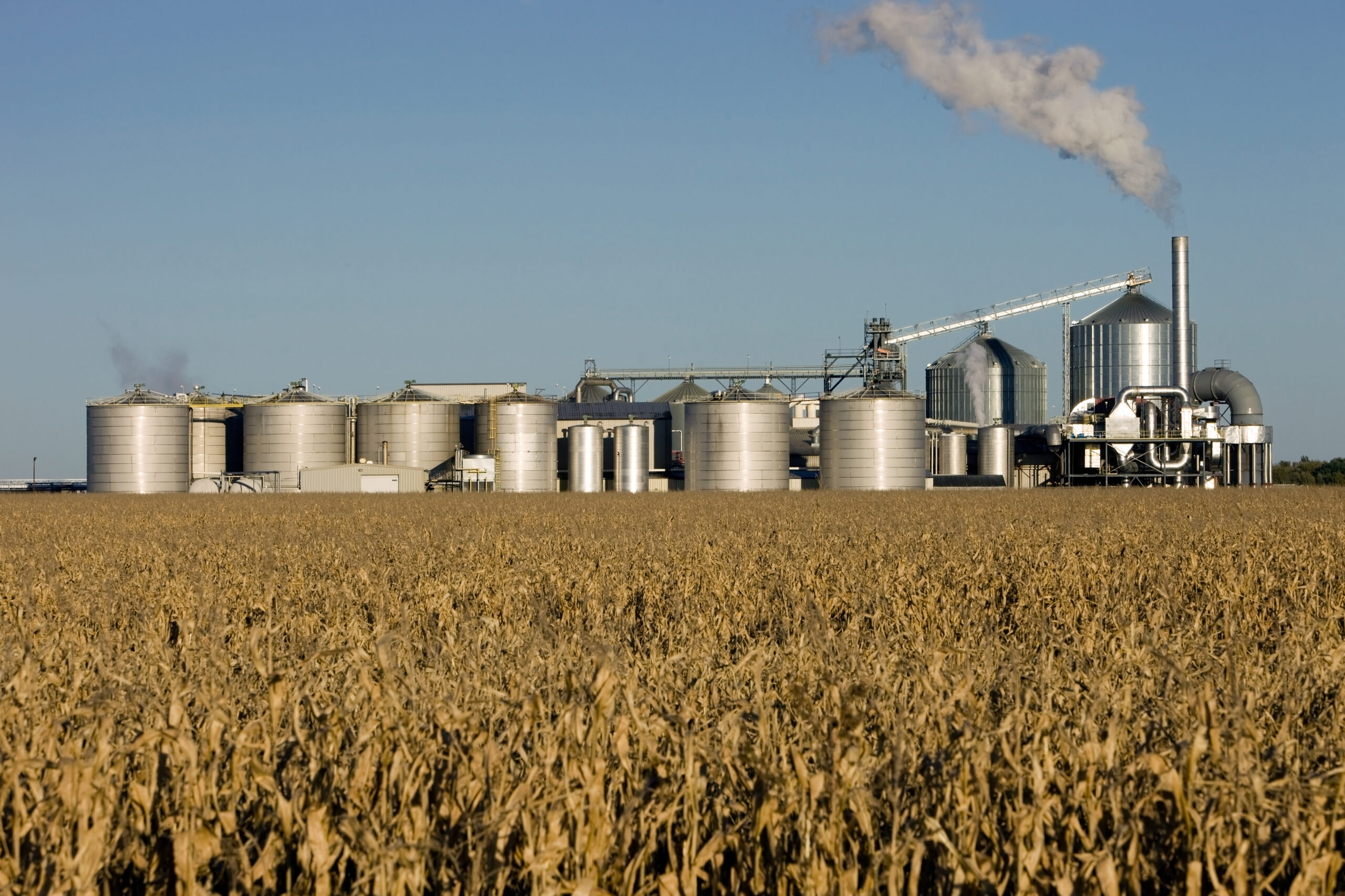 Weizenfeld mit einer Ethanol Raffinerie im Hintergrund